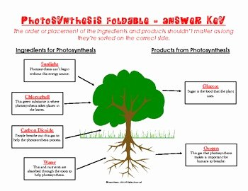 Photosynthesis Worksheet Middle School Lovely Synthesis Foldable by the Vibrant Va Stu S Shop and