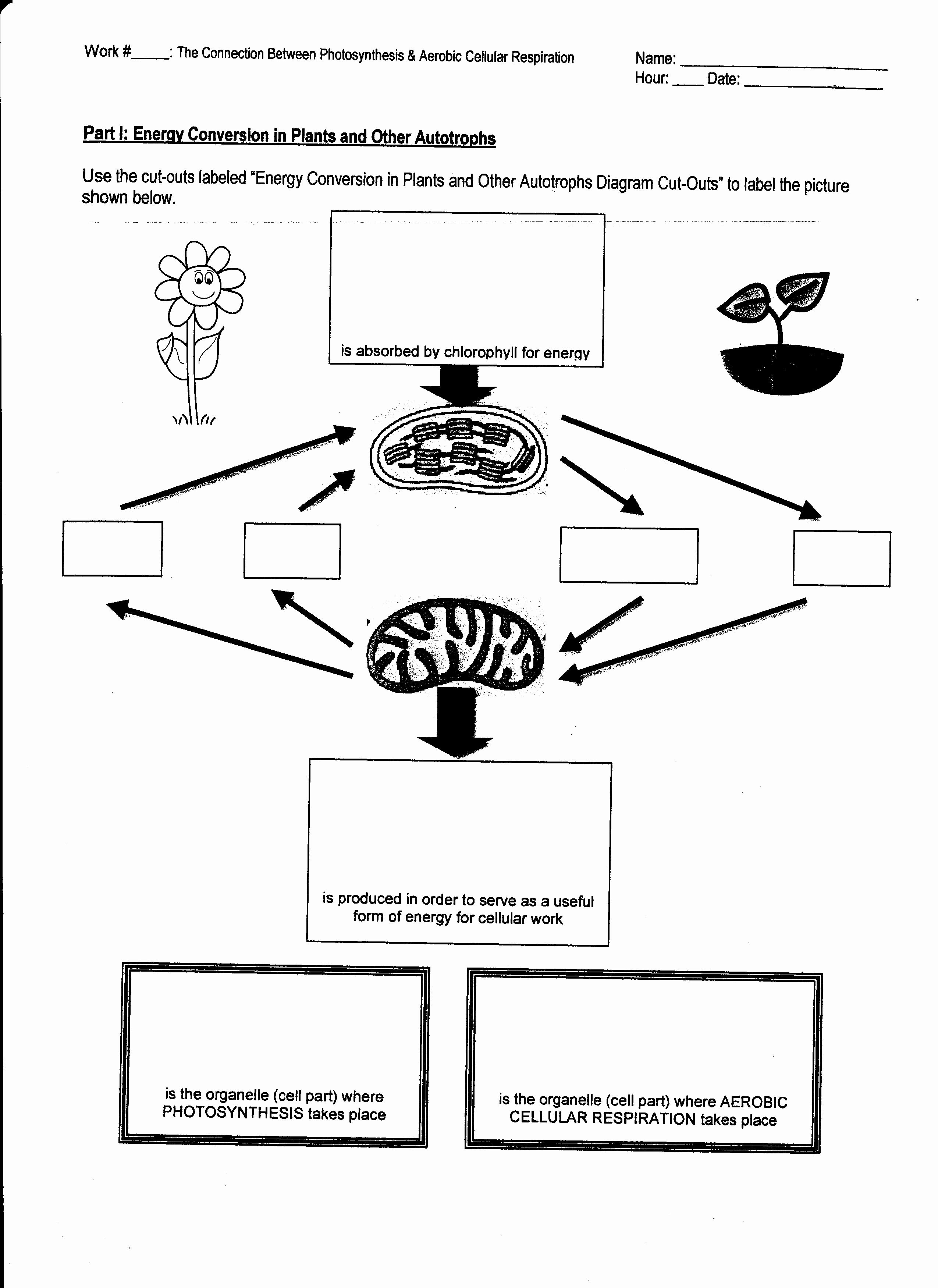 Photosynthesis Worksheet Middle School Lovely Week 15 Synthesis and Respiration