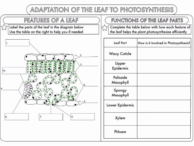 Photosynthesis Worksheet Middle School Luxury Gcse Synthesis topic Worksheets by Beckystoke