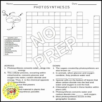 Photosynthesis Worksheet Middle School Luxury Synthesis Crossword Puzzle by Teaching Tykes
