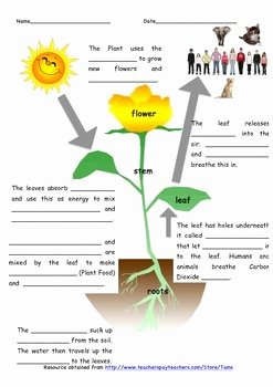 Photosynthesis Worksheet Middle School New Synthesis Worksheet by Tams