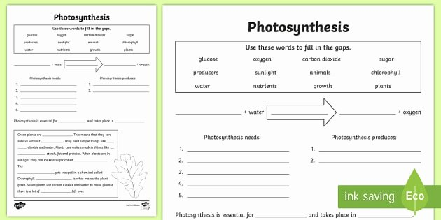 Photosynthesis Worksheet Middle School New Synthesis Worksheet Pdf Twinkl