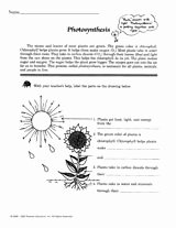 Photosynthesis Worksheet Middle School Unique Science Printables Lesson Plans & Activities for