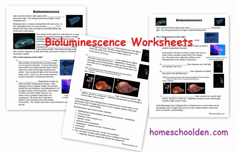Planet Earth Ocean Deep Worksheet Luxury Bioluminescence and Ocean Zones Ocean Unit Activities