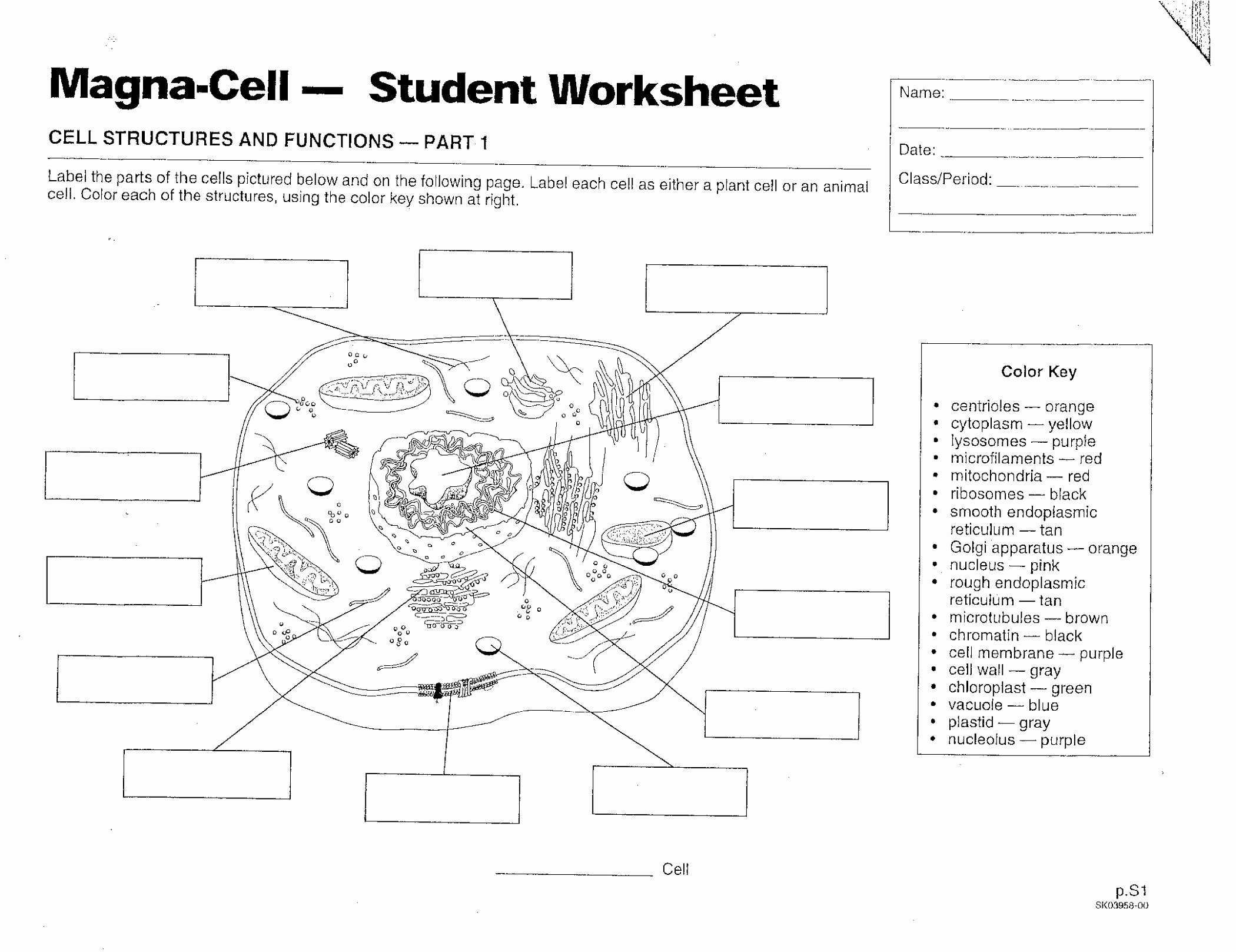 Plant Cell Worksheet Answers Awesome Plant and Animal Cell Diagram Worksheet