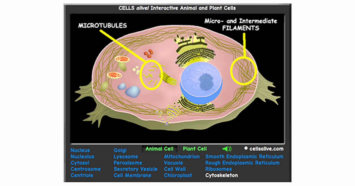 Plant Cell Worksheet Answers Elegant Interactive Cell Models