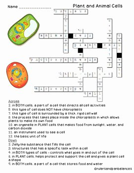 Plant Cell Worksheet Answers Elegant Plant and Animal Cells Vocabulary Crossword Puzzle