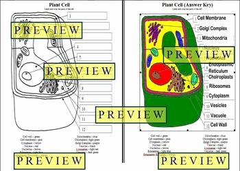 Plant Cell Worksheet Answers Luxury Cells 1 Plant Cell Coloring Worksheet with Questions