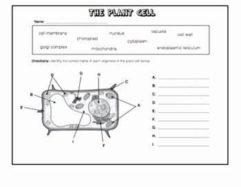 Plant Cell Worksheet Answers Luxury Cells Worksheet Packet W Answer Keys Plant and Animal