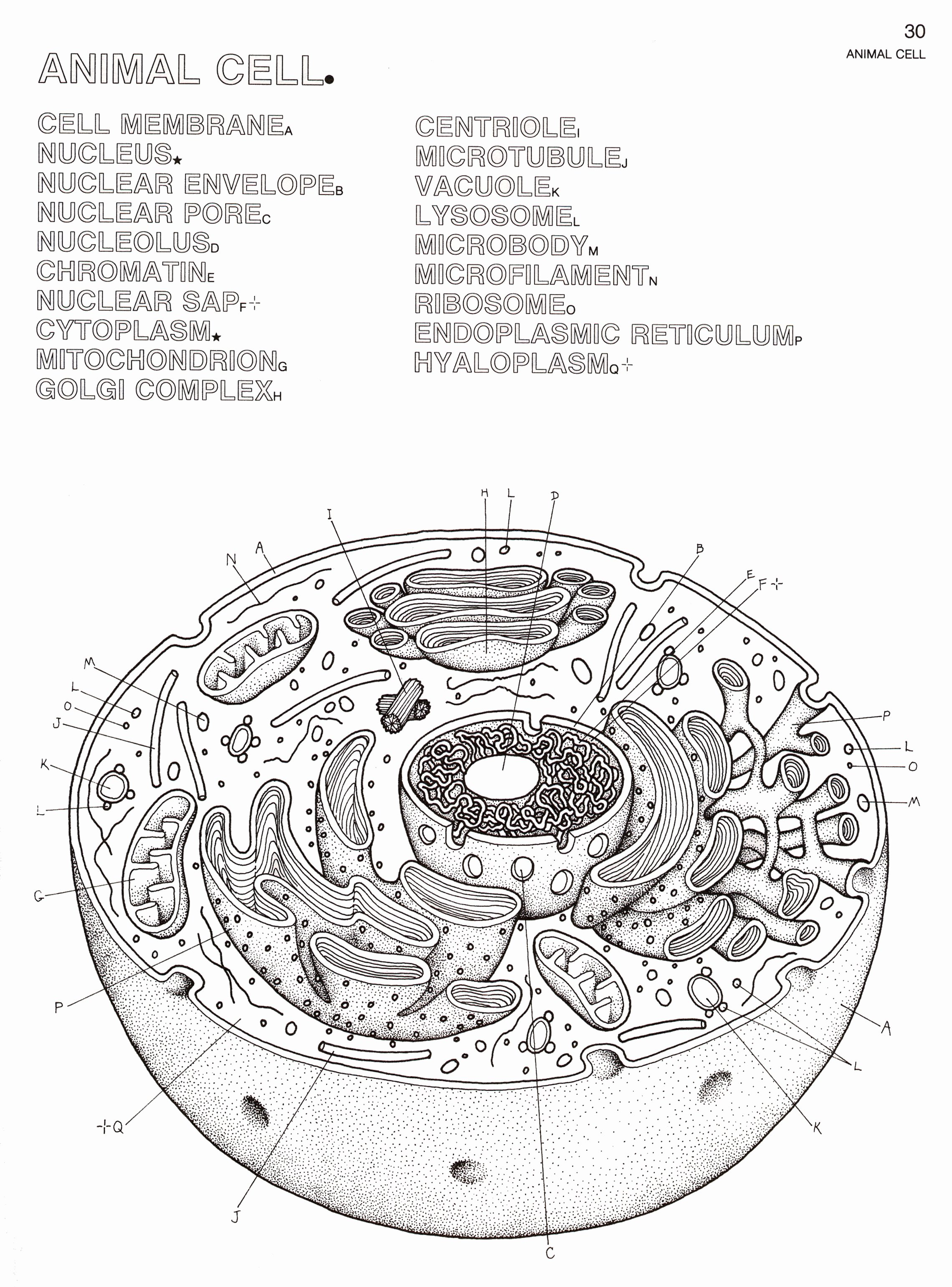 Plant Cell Worksheet Answers New Label Animal and Plant Cell Worksheet the Best Worksheets