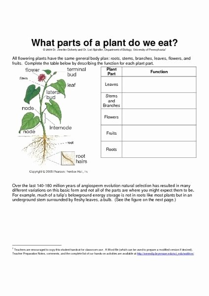 Plant Parts and Functions Worksheet Awesome 49 Best Images About Ag Head On Pinterest