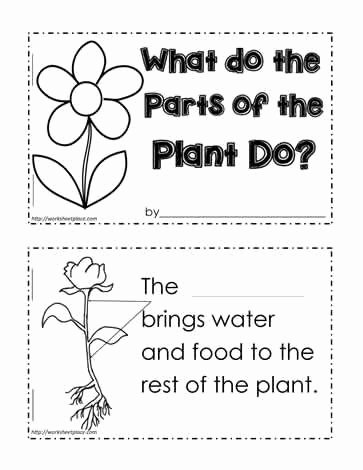 Plant Parts and Functions Worksheet Awesome Plant Functions Worksheet Teaching