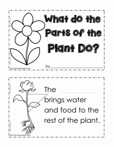 Plant Parts and Functions Worksheet Awesome Plant Functions Worksheet Worksheets