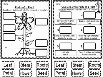 Plant Parts and Functions Worksheet Awesome Plant Parts and Functions Cut and Paste Activities