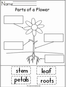 Plant Parts and Functions Worksheet Beautiful Great Printable Resources – Plants
