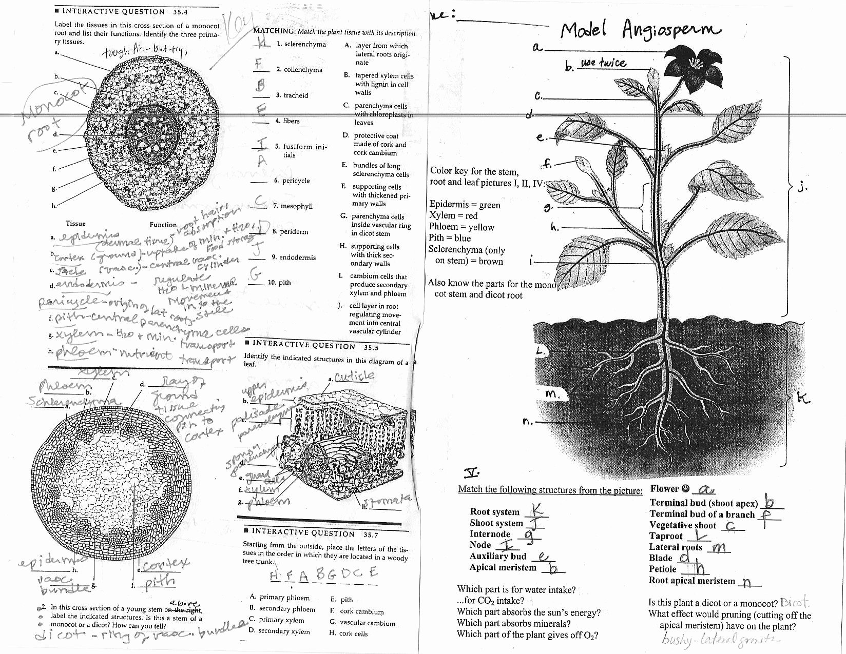 Plant Parts and Functions Worksheet Best Of 49 Plant Structure and Function Worksheet 14 Best