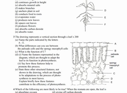 Plant Parts and Functions Worksheet Best Of New Page 1 [teacherssduhsdnet] Plant Structure and