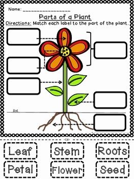 Plant Parts and Functions Worksheet Best Of Plant Parts and Functions Cut and Paste Activities