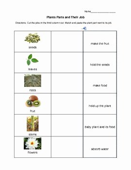 Plant Parts and Functions Worksheet Elegant Plant Parts and Functions Differentiated Activity