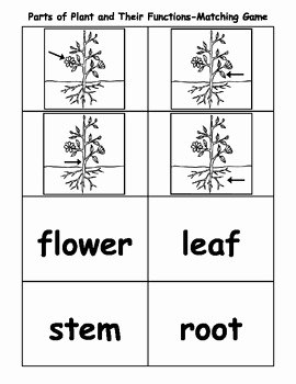 Plant Parts and Functions Worksheet Fresh Parts Of Plant and their Functions Matching Game by