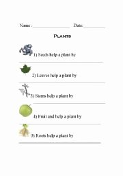 Plant Parts and Functions Worksheet Lovely English Worksheets Plant Parts
