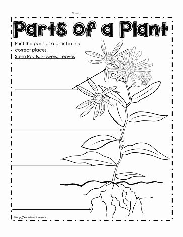Plant Parts and Functions Worksheet Lovely Label the Parts Of A Plant