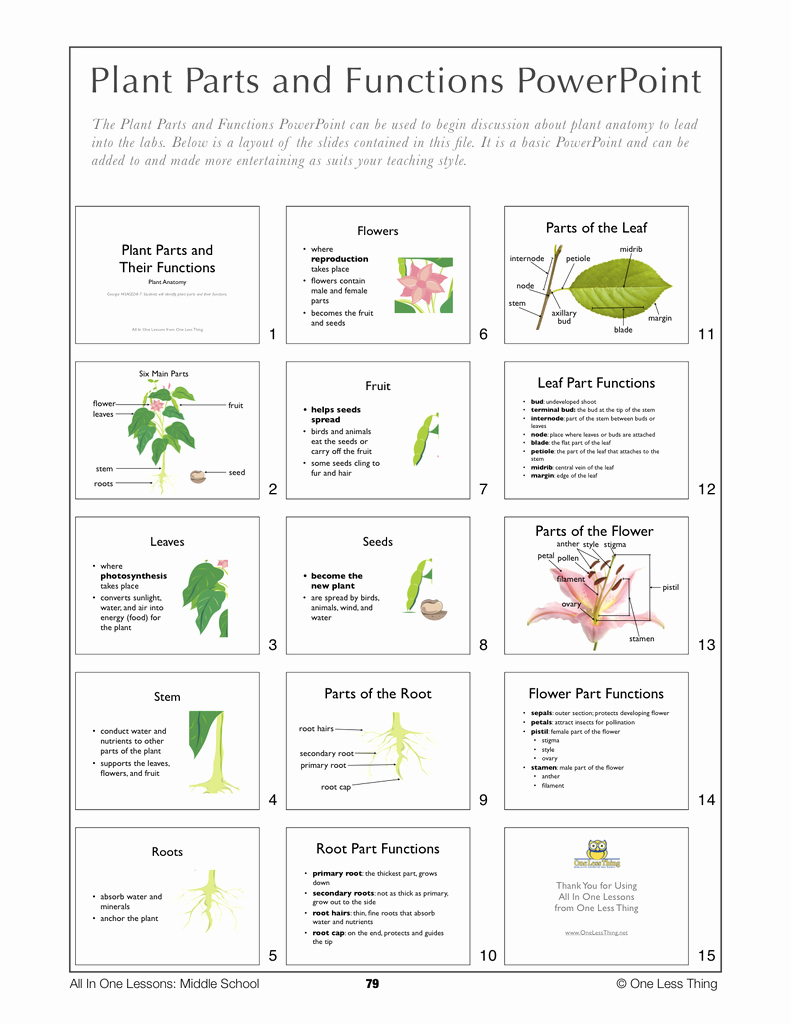 Plant Parts and Functions Worksheet Luxury 8 08 Plant Parts and Functions Lesson Plan Download E