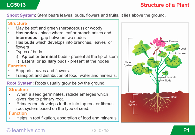Plant Parts and Functions Worksheet New 49 Plant Structure and Function Worksheet 14 Best