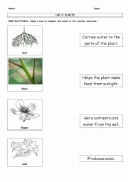 Plant Parts and Functions Worksheet New Parts A Plant and their Functions Worksheet the Best