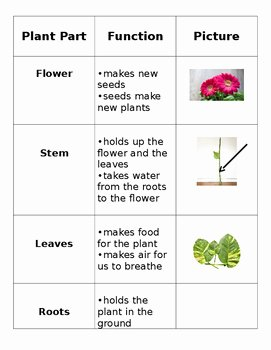 Plant Parts and Functions Worksheet New Plant Parts Card sort by Espy S Field