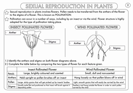 Plant Reproduction Worksheet Answers Awesome Plant Reproduction Worksheet Pack by Beckystoke Teaching