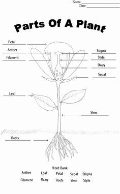 Plant Reproduction Worksheet Answers Awesome This Worksheet Describes the Parts Of the Flower Students
