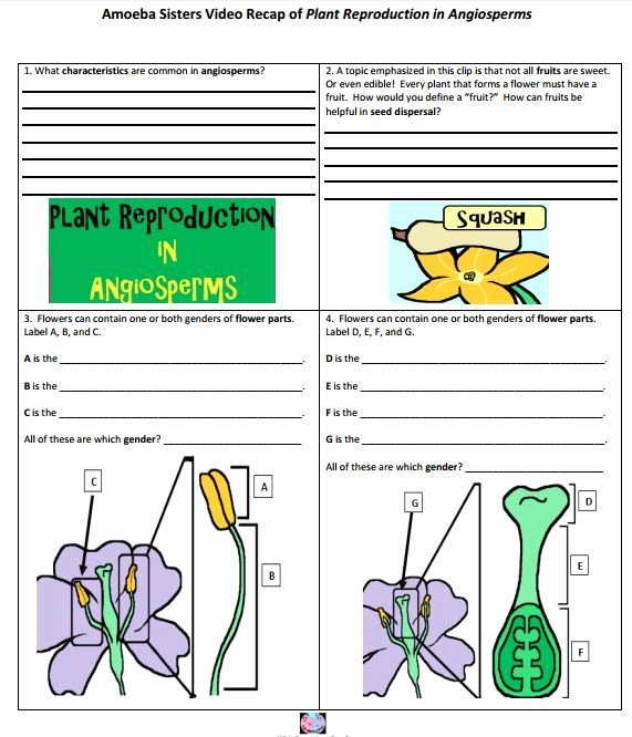 Plant Reproduction Worksheet Answers Beautiful Angiosperm Flower Reproduction Handout Made by the