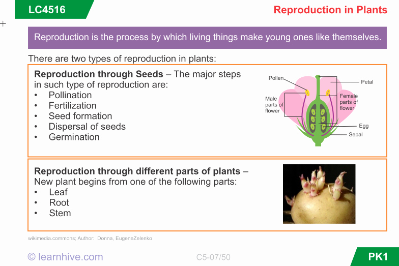 Plant Reproduction Worksheet Answers Fresh Learnhive