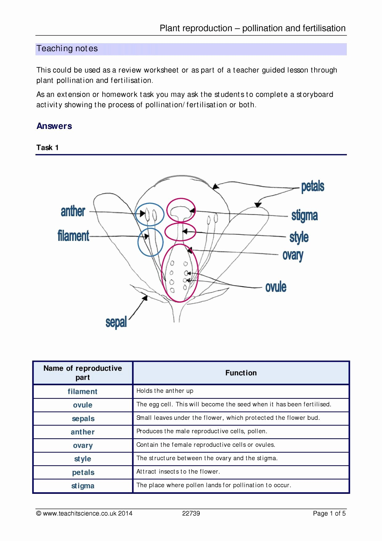 Plant Reproduction Worksheet Answers Luxury Plant Reproduction Pollination and Fertilisation