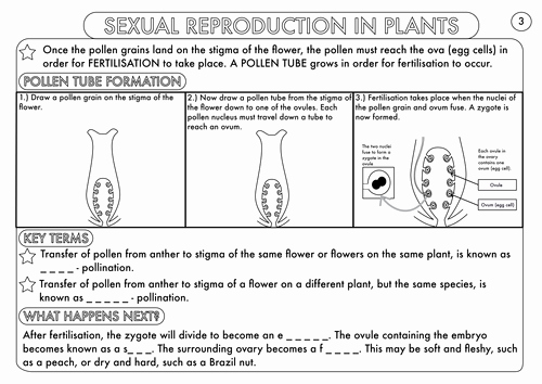 Plant Reproduction Worksheet Answers New Plant Reproduction Worksheet Pack by Beckystoke Teaching