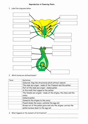 Plant Reproduction Worksheet Answers New Plant Reproduction Worksheet Pack by Beckystoke Uk