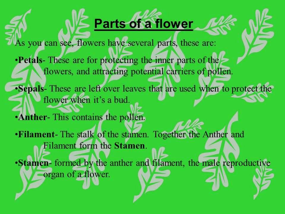 Plant Reproduction Worksheet Answers Unique Flowers Pictures 100 Epic Best Flower Structure and
