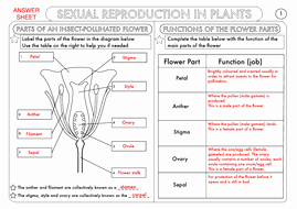 Plant Reproduction Worksheet Answers Unique Gcse Biology Plant Reproduction Worksheet Pack by