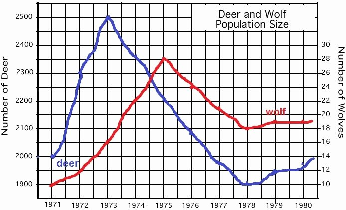 Population Ecology Graphs Worksheet Answers Inspirational Deer Predation or Starvation Happy Kids
