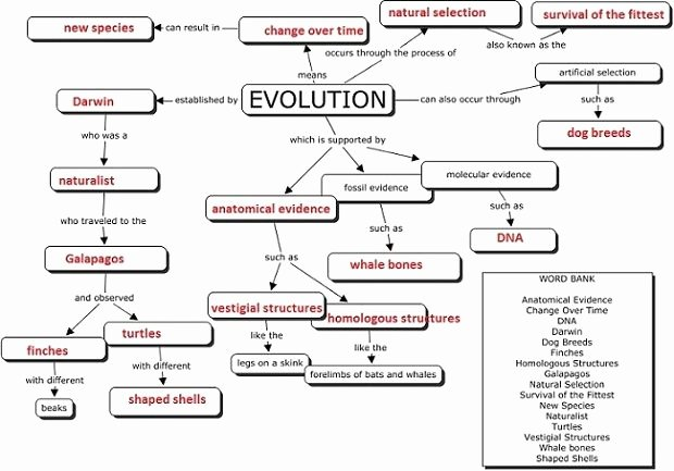 Principles Of Ecology Worksheet Answers Fresh Evolution Concept Map Endangered Bears