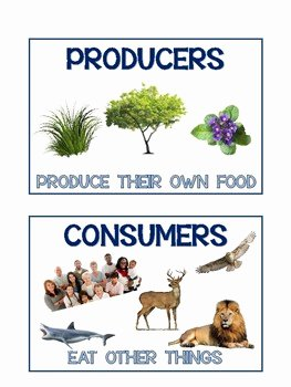 Producer Consumer Decomposer Worksheet Awesome Producer Consumer and De Poser Anchor Charts by Miss