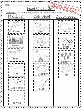 Producer Consumer Decomposer Worksheet Beautiful Food Chains Producers Consumers and De Posers Cut and