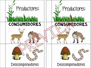 Producer Consumer Decomposer Worksheet Beautiful Food Web Roles Consumers Producers De Posers Spanish