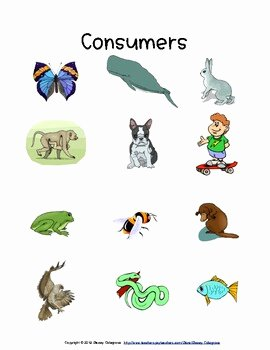 Producer Consumer Decomposer Worksheet Beautiful Ngss Ls2 Producers Consumers De Posers Lessons