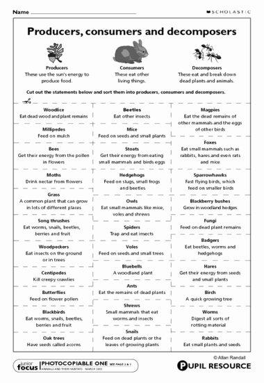 Producer Consumer Decomposer Worksheet Best Of 11 Best Of Food Chain Worksheet Pdf Food Web