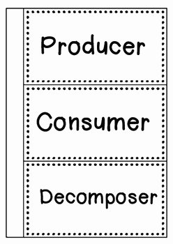 Producer Consumer Decomposer Worksheet Best Of Food Chain sort Producer Consumer and De Poser by the