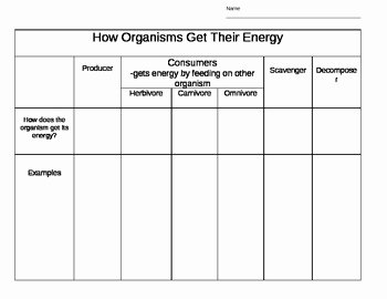 Producer Consumer Decomposer Worksheet Best Of Producers Consumers De Posers How they Get Energy by