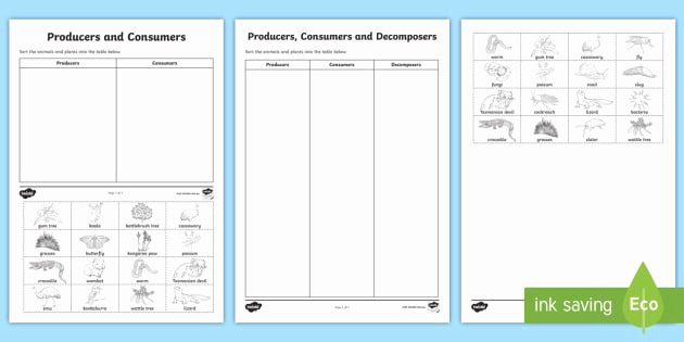 Producer Consumer Decomposer Worksheet Elegant Producers Consumers and De Posers sorting Worksheet