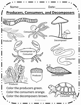 Producer Consumer Decomposer Worksheet Fresh Color the Producers Consumers and De Posers by Little